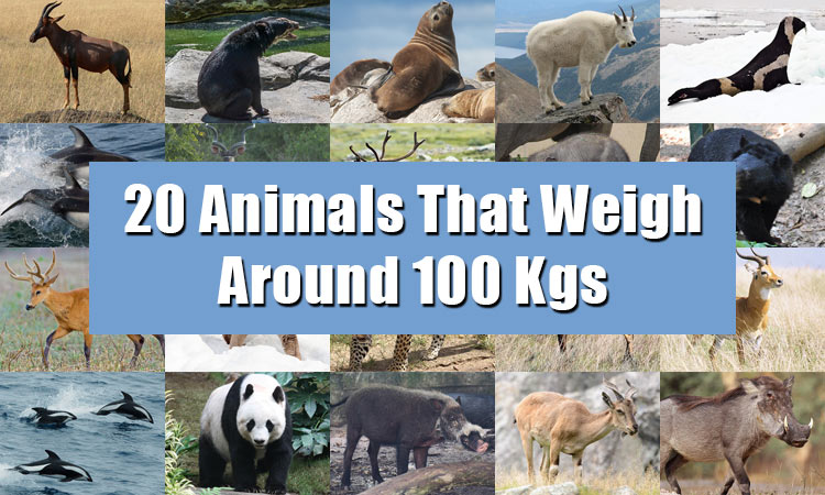 List of 20 Animals That Weigh Around 100 kgs (220 lbs