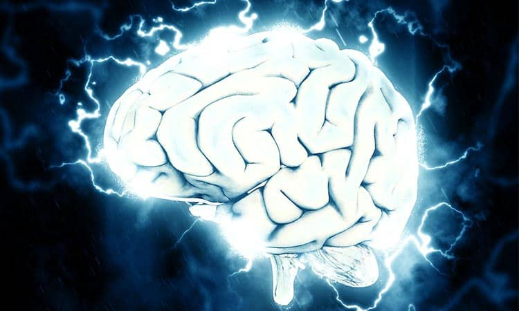 How-Much-Does-The-Human-Brain-Weigh