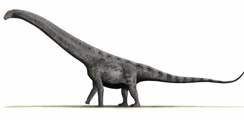 Argentinosaurus Huincuslensis