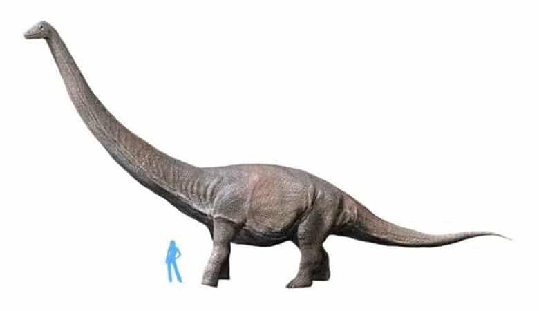 Dreadnoughtus-Scrani
