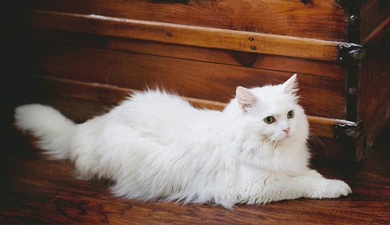 cat-10-pounds-5-kilograms