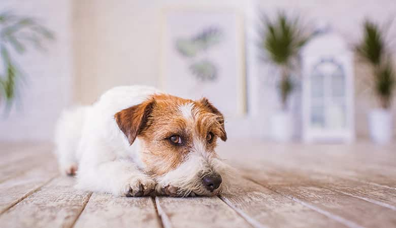 small-dog-10-pounds