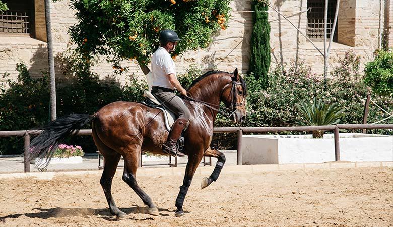 Horses-1200-pounds