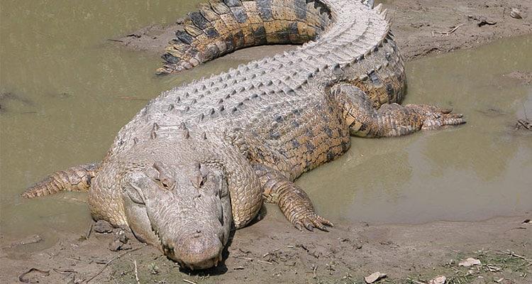 List of Animals That Weigh Around 2000 Pounds