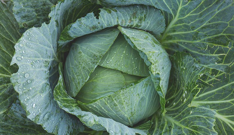 Green-Cabbage-weight