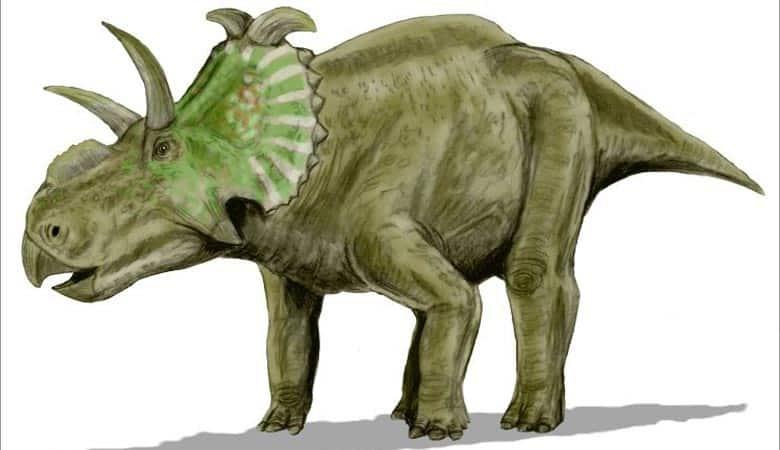 Albertaceratops-3-tons