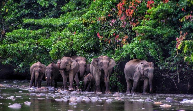Borneo-elephant-weight