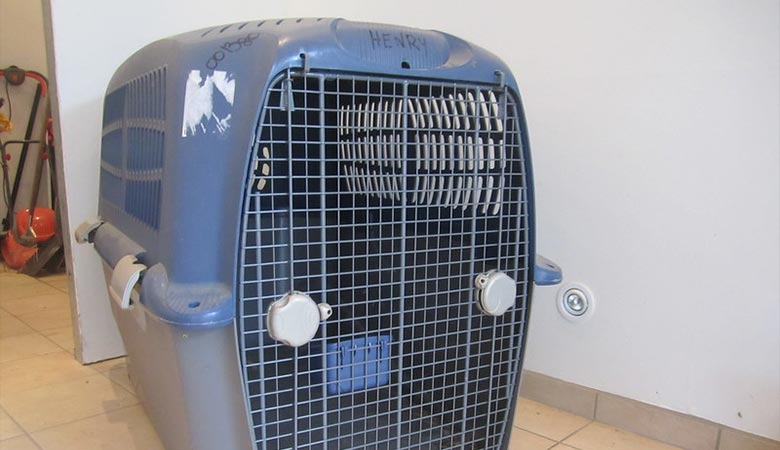 Dog-Crate-20-pounds