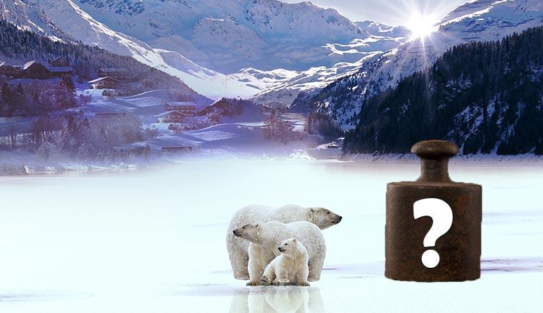 how-much-do-polar-bears-weigh