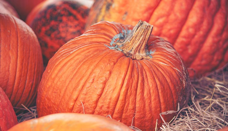 pumpkin-10-pounds