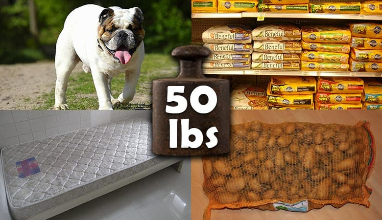 common-items-that-weigh-50-pounds