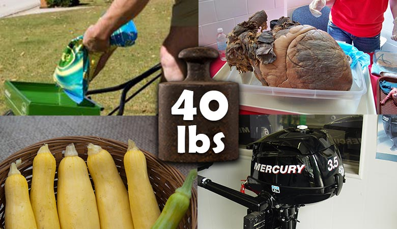 items-that-weigh-40-pounds