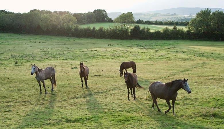 horses-6-tons