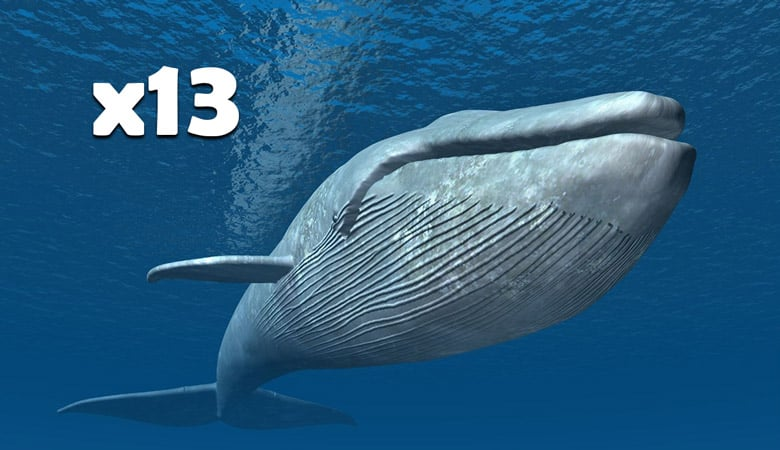 13-blue-whales-2000-tons
