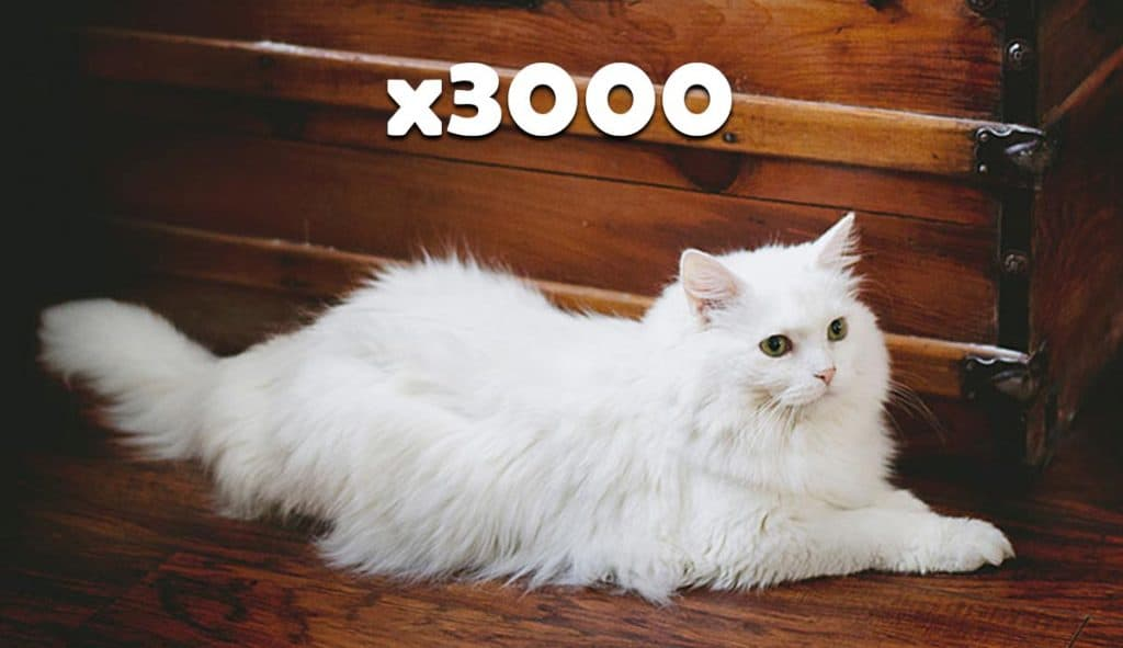 3000-cats-15-tons