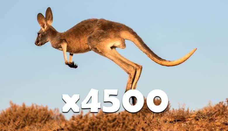 4500-kangaroos-400-tons
