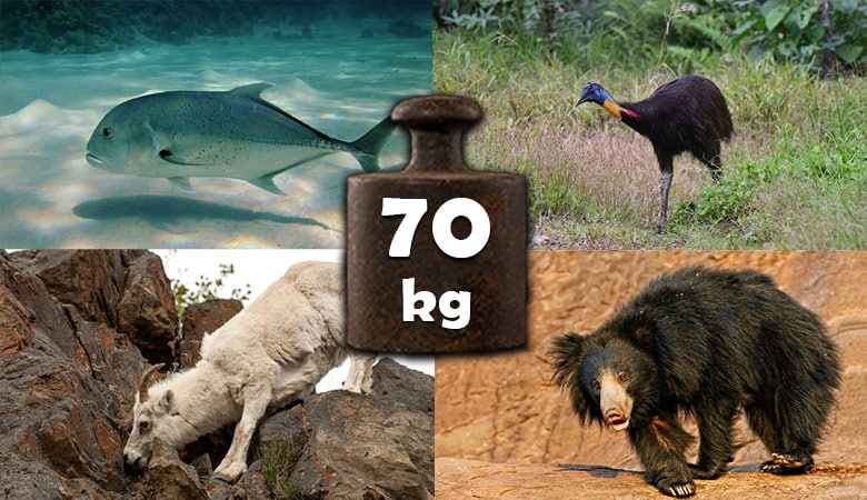 animals-that-weigh-about-70-kg