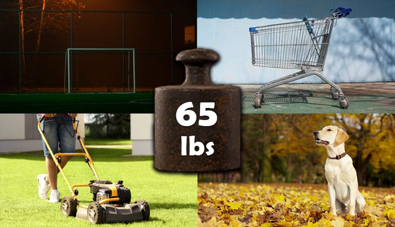 items-that-weigh-65-pounds