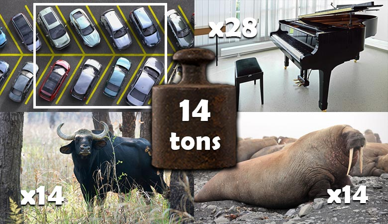 things-that-weigh-14-tons